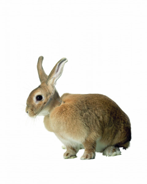 Buster Kaninchenhalskragen 5cm 10 Stück