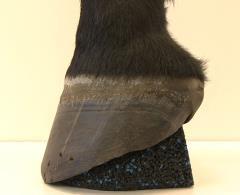 Hufkissen - Größe IV