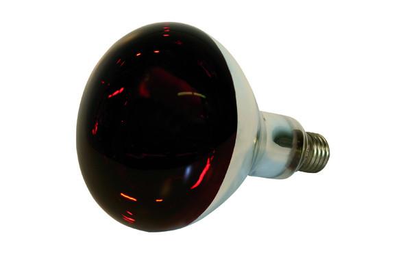 Rotlicht-Lampe 150w zu 29102